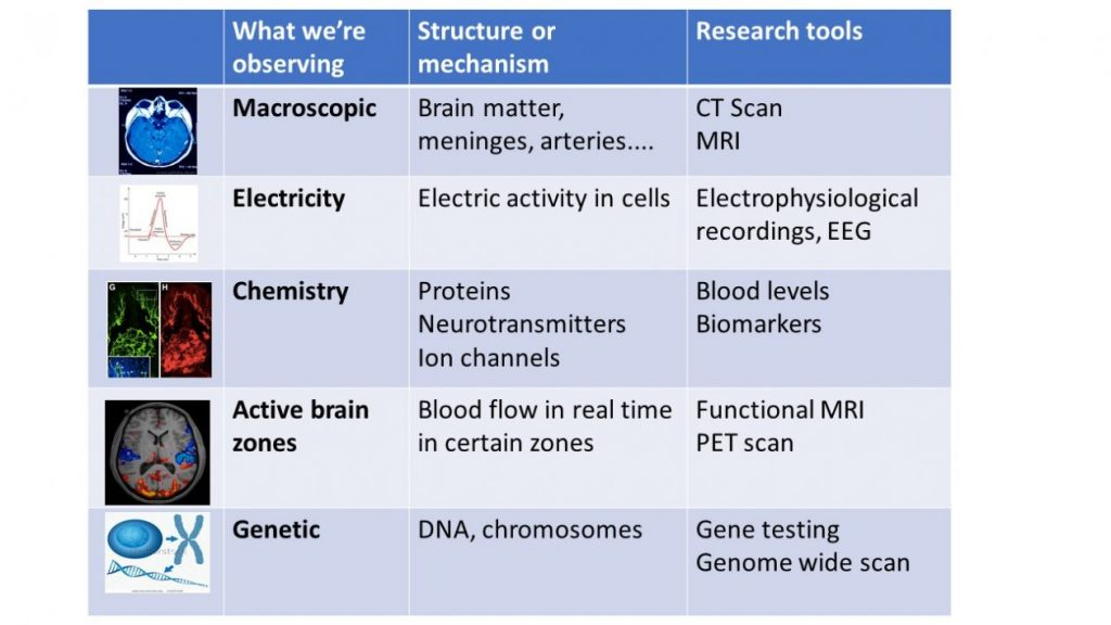 Tools to study the brain